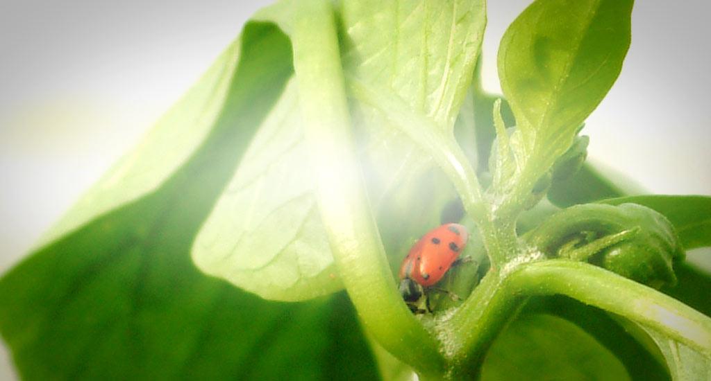 Imagen del Foro de Asociación de Horticultores de Bizkaia